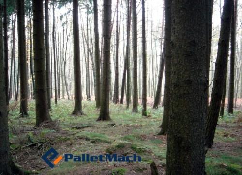 timber shortage